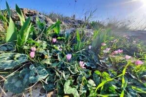 צמחייה במצפה אופיר