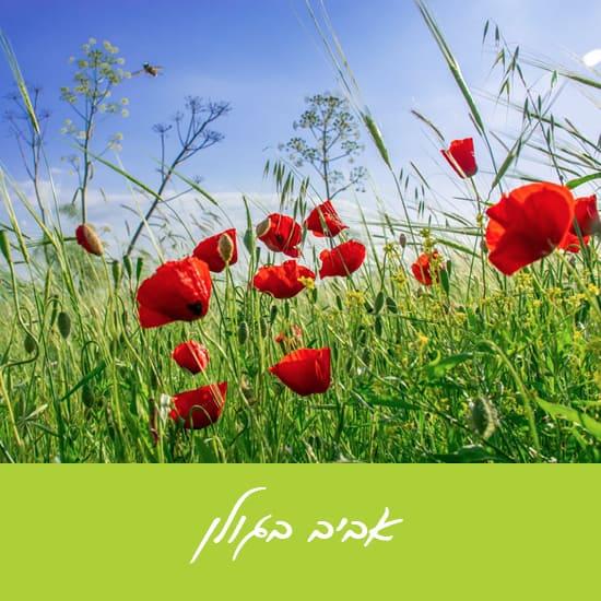 אביב בגולן תיירות
